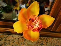 DSCN0201 (pratesip) Tags: fiori oro giallo la bellezza