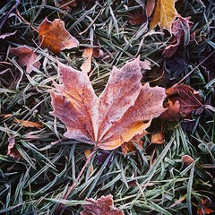 Photo of #leaf in #morning #frost #grass #nature #autumn #Scotland