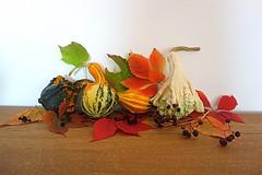 decorative pumpkins (majka44) Tags: autumn pumpkin color light stilllife flora macro table 2019 october leaves berries