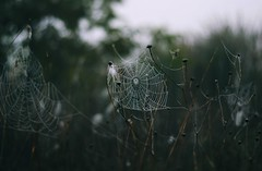 * (PattyK.) Tags: web spiderweb snapseed nikond3100 countryside nature autumn october ioannina giannena giannina epirus ipiros balkans hellas ellada whereilive fog ιωάννινα γιάννενα ήπειροσ ελλάδα βαλκάνια φύση ομίχλη οκτώβριοσ φθινόπωρο ιστόσ naturephotography