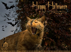 Happy Halloween 2019!!! (Xena*best friend*) Tags: britney happyhalloween cats whiskers feline katzen gatto gato chats furry fur pussycat feral tiger pets kittens kitty animals piedmontitaly piemonte canoneos760d italy wood woods wildanimals wild paws calico markings ©allrightsreserved purr digitalrebelt6s flickr outdoor animal pet photo nature catlover autumn automne autunno outono iloveautumn halloweenpost halloweencard cc100 kittystormtroopers efs18135mmf3556isstm