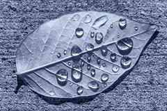 after the rain ... (mariola aga) Tags: pavement leaf autumn rain raindrops water drops blue closeup art monochrome