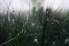 Stretched (PattyK.) Tags: web spiderweb snapseed nikond3100 countryside nature autumn october ioannina giannena giannina epirus ipiros balkans hellas ellada whereilive fog ιωάννινα γιάννενα ήπειροσ ελλάδα βαλκάνια φύση ομίχλη οκτώβριοσ φθινόπωρο ιστόσ naturephotography