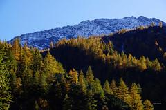 In ordine sparso (stefano.chiarato) Tags: autumn snow mountains montagne piemonte neve autunno bosco larici italy landscape pentax paesaggio pentaxlife valantrona pentaxflickraward pentaxk70