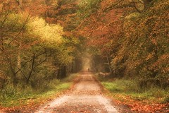 Let it find you (marionrosengarten) Tags: forest autumn colours colourful trees leaves foliage wood wald laub blätter morning mood silence view nikon person humanelement cyclist goldenoctober golden tunnel forestpath