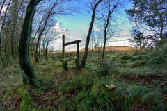 MoorlandEdge (Tony Tooth) Tags: nikon d7100 samyang 8mm fisheye stile toadstools woodland moors moorland revidgemooor warslow staffs staffordshire countryside staffordshiremoorlands hdr