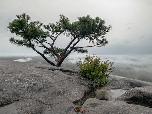 stone_mountain_web-5