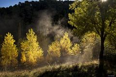 Brumas otoñales (Francisco José López) Tags: franciscojoselopezmorante pentaxk1 otoño autumn amanecer naturaleza paisaje brumas