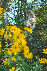 Yellow (Joshua D. Price) Tags: trees tree treetrunk statues statue nature naturephotography birds bird bush bushes park publicpark plants plant green grass lake lakes fox foxes peacocks hawk hawks parrot chicken flowers flower