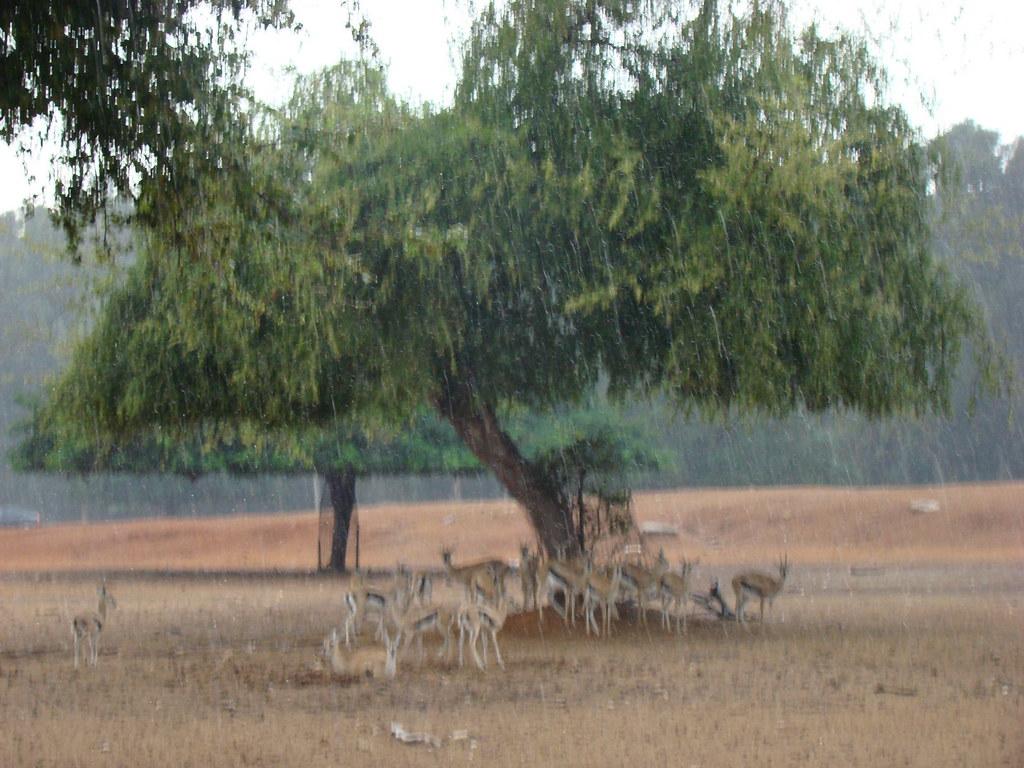 фото: Сезон дождей в саванне