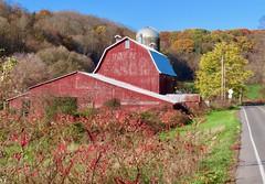 Between Brown and Colors (ironmike9) Tags: onondagany locustspringfarm farm hillside foliage fallcolor barn