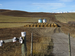 Hats and silos (annkelliott) Tags: alberta canada sofcalgary farmland harvest field haybales texture silos two sidebyside white blue rural ruralscene hill sky outdoor fall autumn 24october2019 canon sx60 canonsx60 powershot annkelliott anneelliott ©anneelliott2019 ©allrightsreserved
