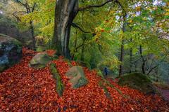 Photographer On The Edge (Rob Pitt) Tags: photographer edge on the autumn orange tree fall leaves cheshire alderley autumnuk