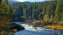 Fall Colors at deadline Falls (Lone Rock) Tags: deadlinefalls fallcolors idleyldpark northumpquariver oregon unitedstates usa