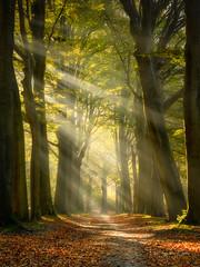 Forest of  Fairytales (Ellen van den Doel) Tags: natuur landscape nature mist nederland outdoor licht bos herfst landschap sunrays forest oktober netherlands fog fall 2019 light bergenopzoom noordbrabant