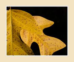 Sheffield Park leafery (Leon.vanKemenade) Tags: lensbaby velvet56 sheffieldpark nationaltrust