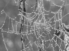 Strings of pearls (ryorii) Tags: stringsofpearls web cobweb spider drops droplets bw biancoenero blackandwhite nature natura fake macromondays hmm
