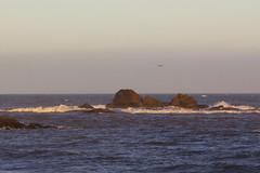 Ocean breeze (Alice Protto) Tags: ocean oceano breeze sunrise sunset sea sand sky canon canoneos550d travel seascape landscape morocco maroc africa afrique canoneos summer travelmorocco essaouira