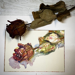Day 1542.  The #rose #painting for today. #watercolour #watercolourakolamble #sketching #stilllife #flower #art #fabrianoartistico #hotpress #paper #dailyproject (akolamble) Tags: rose painting watercolour watercolourakolamble sketching stilllife flower art fabrianoartistico hotpress paper dailyproject