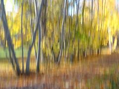 Sunny October Day (evisdotter) Tags: sunnyoctoberday trees träd leaves löv autumn light colors sooc nature icm intentionalcameramovement grönaudden mariehamn