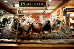 Don't rock the boat! (Dan Haug) Tags: lakeplacid kitsch adrirondack stuffed raccoon badger canadianbeaver porcupine canoe priceless newyorkstate northcountry fujifilm fujixseries xt3 xf1655mm xf1655mmf28rlmwr mirrorless theadirondackstore