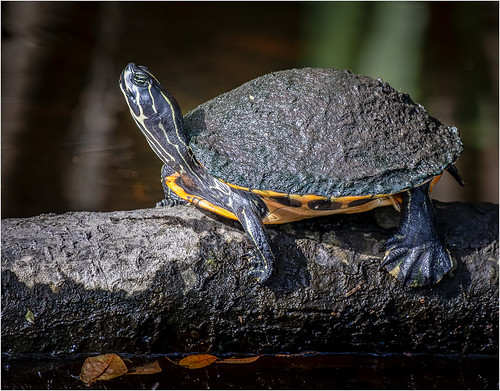 Turtle Chuck Hunnicutt - Class B Digital HM - Sept 2019