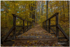 OCTOBER 2019 _1116_NGM_4116-1-222 (Nick and Karen Munroe) Tags: bridge wooden woodbridge woodenbridge heartlakeconservationarea heartlakeconservation heartlakepark heartlake conservationarea conservation gold orange yellow cool flora outside landscape landscapes october forest tree trees woods hike trail hiking forests wood natural fall autumn fallsplendor fallcolours karenick23 karenick karenandnickmunroe karenandnick munroe karenmunroe karen nickandkaren nickandkarenmunroe nick nickmunroe munroenick munroedesigns photography munroephotoghrpahy munroedesignsphotography nature brampton bramptonontario ontario ontariocanada outdoors canada d750 nikond750 nikon colour colours color colors nikon2470f28 2470 2470f28 nikon2470 nikonf28 f28
