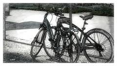 Bicicletas (o.dirce) Tags: bikes bicicletas rua dirce odirce