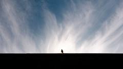 Pigeon Almighty (Eksworks) Tags: d7000 budapest gellert sky blue cloud pigeon bird animal almighty street nikon