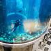 AquaDom in the Radisson Blu Hotel