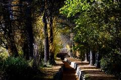 LOS OTROS DIAS DEL OTOÑO (marthinotf) Tags: otoño canal paseo arboles lucesdeotoño pinos alamos platanos nogal lagunadeduero losvalles valladolid soldeotoño hojas hojassecas puente