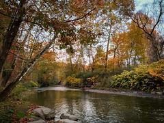 Fall Foliage Over Peters Creek (sumilex77) Tags: colors jeffersonhills autumn foliage fall creek water pennsylvania commonwealthpa