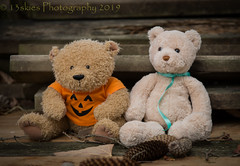 Counting Pine Cones (HTBT) (13skies) Tags: halloween shirt spooky pumpkins pinecones front counting teddybear two duo sitting playing happyteddybeartuesday orange fuzzy fun green tones buddies pals htbt teddy sonyalpha99