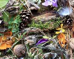 October Treasures (Sandra Mahle) Tags: october autumn fall autumncolors nature naturephotography canon