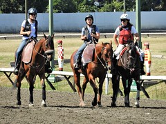 The Wild Bunch (knightbefore_99) Tags: hastings racecourse vancouver eastvan august bc day bet betting fun sun sunny sol horse cheval wild bunch ladies scary yikes fear trio