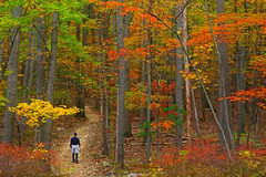 Catoctin: Autumnal forest (Shahid Durrani) Tags: catoctin mountain park maryland selfie autumn forest fall foliage