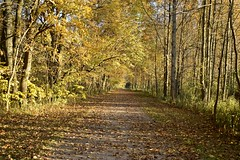 Fall Colors (Myusername432) Tags: trees fall autumn leaves evening yellow trail nature landscape carlisle reservation park ohio