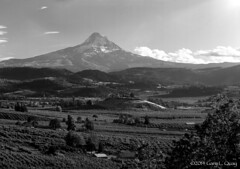 Mount Hood from Panorama Lodge (Gary L. Quay) Tags: mounthood mthood oregon hoodriver columbiagorge panoramalodge mountain august 2014 film largeformat filmphotography pacificnorthwest outside outdoors westernusa hoodrivervalley ilford fp4 ilfotechc darkroom developing usa