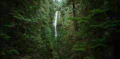By Proxy (Zeb Andrews) Tags: horseman6x12 pano panoramic proxyfalls mckenziepass oregon pacificnorthwest kodakektar100 landscape zaahphoto panorama green forest willamettenationalforest roadtrip waterfall