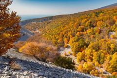 Combe de la Grave - Mont Ventoux (jean-louis21) Tags: automne ventoux automn provence mont forêt golden