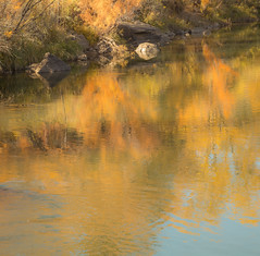 Reflections (Mandira2007) Tags: newmexico riogrande fallcolors reflections autumncolors