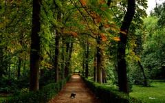 ...de paseo ? (Garciamartín) Tags: naturaleza árboles otoño paseo jardines parque parquedelretiro gato madrid españa europa garciamartín nino