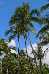 Paradise forever and ever (yuriye) Tags: myanmar burma burmese palm tree coconut coast ngapali nature resort seaside paradise asia travel азия пальма нгапали мьянма бирма рай bengal rakhine state arakan ရခိုင်ပြည်နယ်
