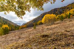 Petit belvédère du Mont Viso (jean-louis21) Tags: queyras belvédère mont viso fall colors montain alpes