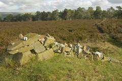 Oddity (Tony Tooth) Tags: nikon d7100 sigma 1750mm sculpture rocks moors moorland revidgemoor warslow staffs staffordshire staffordshiremoorlands