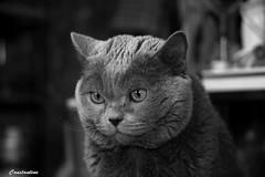 Antonio (Сonstantine) Tags: blackandwhite blackwhite bw catslife canon cat animals