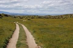 A Road Less Traveled (nedlugr) Tags: california ca usa sanluisobispocounty carrizoplainnationalmonument carrizoplain dirtroad grassland clouds view wildflowers ruralwest ruralroad ruralscene