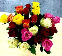 Team Flowers (Roy Richard Llowarch) Tags: fareham royllowarch royrichardllowarch llowarch flowers flower rose roses yellow orange pink red cream redrose redroses pinkrose pinkroses yellowrose yellowroses creamrose creamroses beautiful pretty beautifulflowers color colour colorful colourful