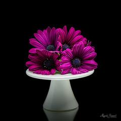 Purple flowers (Magda Banach) Tags: nikond850 blackbackground bouquet colors flora flower macro nature plants porcelain purple reflection