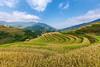 _J5K0025.1011.La Pán Tẩn.Mù Cang Chải.Yên Bái (hoanglongphoto) Tags: asia asian vietnam northvietnam northwestvietnam landscape vietnamlandscape terraces terraceslandscape vietnamterraceslandscape harvest terracesharvest sky bluessky clouds mountain hill hillside treehill canon canoneos1dsmarkiii tâybắc yênbái mùcangchải phongcảnh ruộngbậcthang phongcảnhruộngbậcthang lúachín mùagặt ruộngbậcthangmùcangchải bầutrời bầutrờixanh mây núi đồi sườnđồi đồicây abstract trừutượng curve đườngcong canonef15mmf28fisheye lapántẩn northernvietnam terracedfields mùcangchảimùalúachín mùcangchảimùagặt
